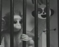 "Lightbox: Making ""Monkey Love Experiments"" (Scottish BAFTA Winner)"